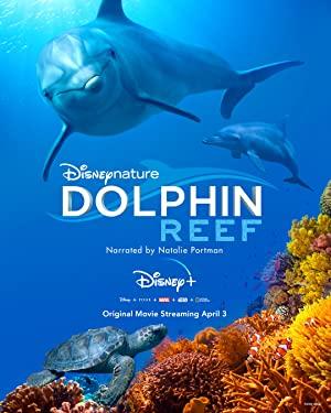 Dolphin Reef صخره دلفین