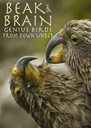 Beak & Brain - Genius Birds from Down Under پرندگان نابغه