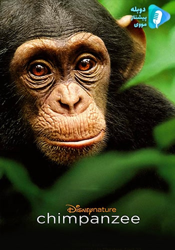 Chimpanzee شامپانزه